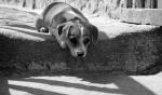 Dog at the Kerb